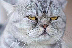 O que os gatos pensam de nós